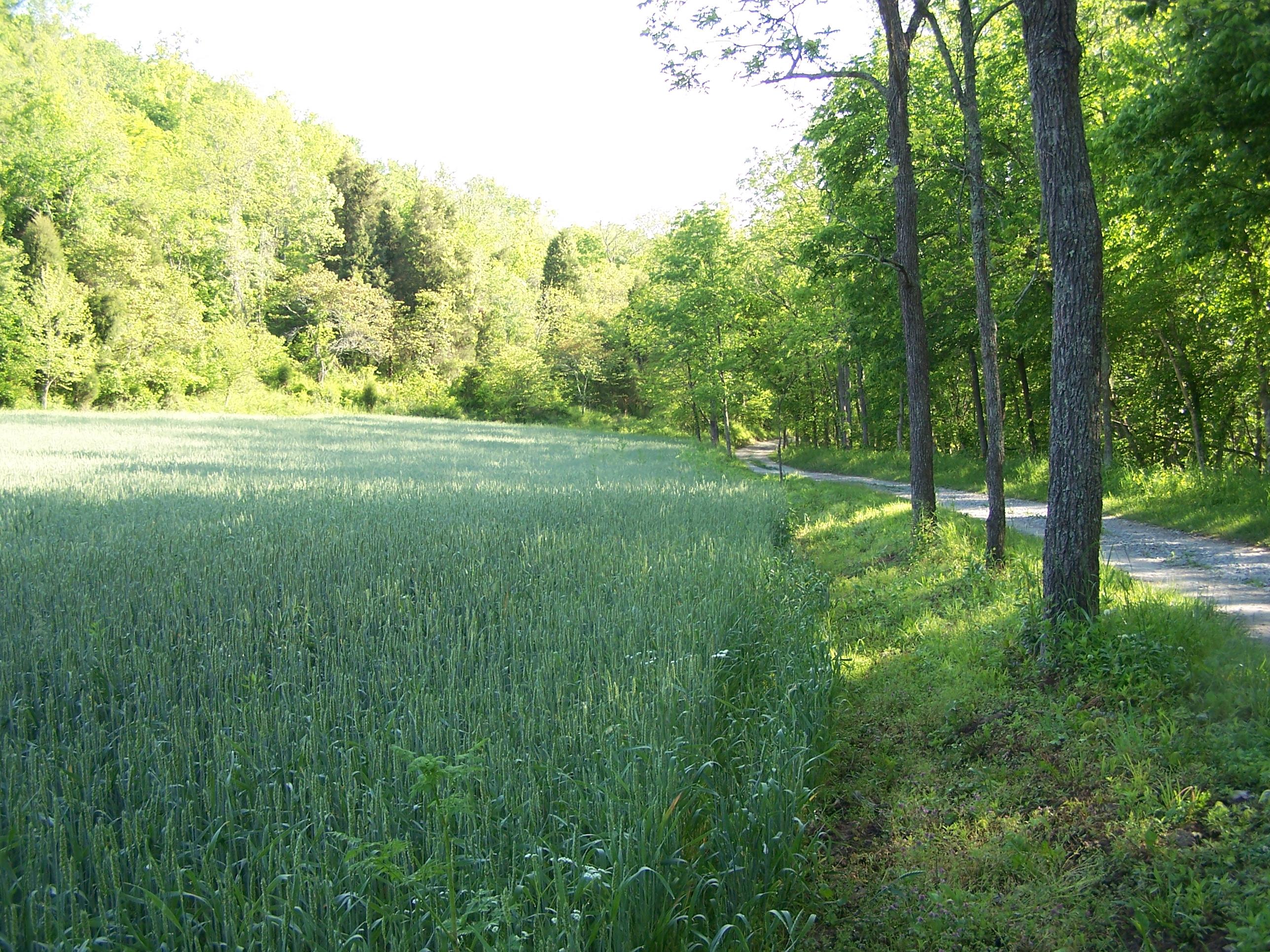 Straight Creek Valley Farm